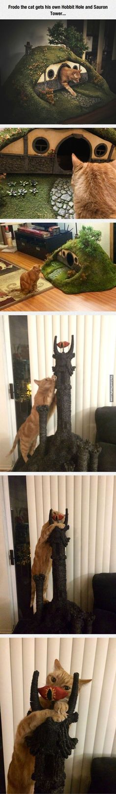 Frodo The Cat. I don't know if our cats would actualy play with these #CatFunny