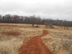 One of our mountain bike trails at Clay Crossing. This is before the split into moderate and difficult trains.