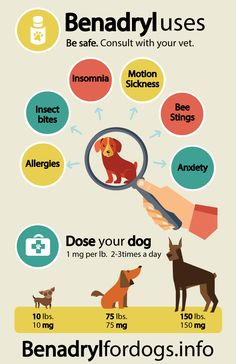 Benadryl-dosage-for-dogs