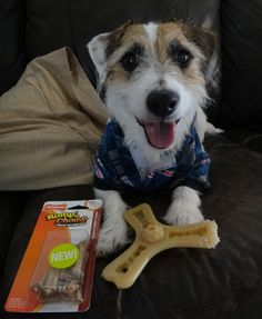 Just Jesse is really enjoying our Romp 'n Chomp treat toys lately. Has your dog tried one? Save $3.00 off any Romp'n Chomp Treat Toy http://www.nylabone.com/about/coupons/ #dogs #pets #coupons