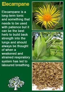 Richard Whelan ~ Medical Herbalist ~ Elecampane