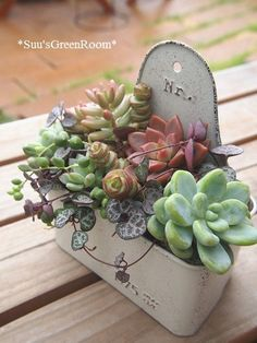 Possibilities are endless when it comes to planting succulents or cacti