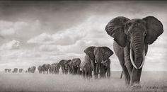 Photographer:  That genius Nick Brandt.  It's as if the animals pose for him.