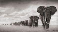 Nick Brandt takes beautiful black & white photos of animals