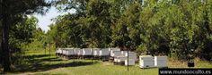 Monsanto ha arruinado nuestra miel  Está contaminada con glifosato de Roundup
