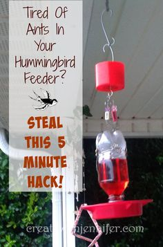 Learn my simple hack for keeping ants out of my hummingbird feeder - Put down the pesticides, all you need are a few tools and these directions! Homemade Hummingbird Feeder, Hummingbird Nests, Hummingbird Plants, Diy Bird Feeder, Humming Bird Feeders, Humming Birds, Sugar Ants, Bird Barn, Barn Owls