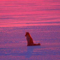 fox Photo by niceviewtokoro