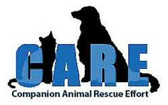 - Just moved to the corner of Campbell Ave. Rescue Dogs, Animal Rescue, Pet Dogs, Places To Volunteer, Bay Area, Animals And Pets, Effort, Batman, Superhero
