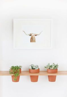 How to: DIY Hanging Planter Shelf