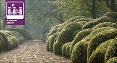 An example of Boxwood Cloudingimage: Wirtz International Landscape Architects