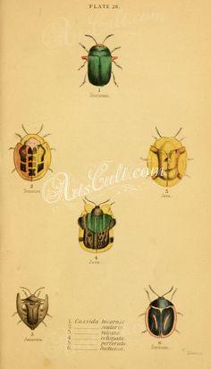 050-Caterpillar      ...