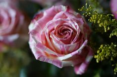 One of a kind, nice new variety :-) Nice, Flowers, Nice France, Royal Icing Flowers, Flower, Florals, Floral, Blossoms