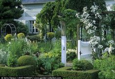 cottage garden with shrubbery