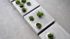 Grey to Green paving slabs bring nature back to cities