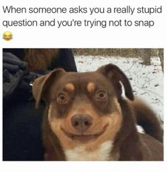 The most Funny Pictures online, funny memes, cool memes, funny animal pictures, and more enjoy! Funny Shit, Funny Dog Memes, Funny Animal Memes, Funny Animal Pictures, Funny Images, Funny Dogs, The Funny, Funny Animals, Cute Animals