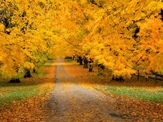 I loiter in the autumn lane, that leads where early years were spent: old thoughts, old faiths come back again as past is with the present blent.