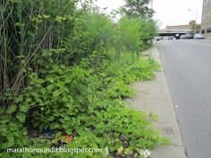 Vegetation covers nearly an entire sidewalk on Russell Avenue in Detroit's Milwaukee Junction neighborhood