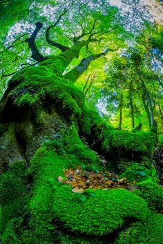 The moss , Switzland