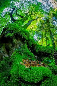 The moss , Switzland