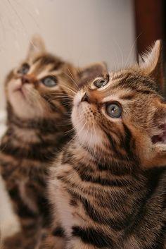 cute kittens  ぴこんっ