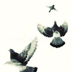 Birds Flying  winter art  bird print  animals by PhotographyDream
