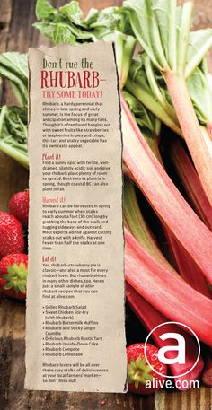 Click through for some of the delicious #rhubarb #recipes!