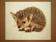 25x30 cm - long-eared hedgehog (in all senses) - pyrography by Lesina Elena