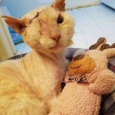 I almost started crying. 1 LIKE- RESPECT @vet_ranch #Cat #Instacat #Instacats #Meow #Instacat_meows #Kitty #Kittycat #Catofinstagram #Cutecat #Instapet #Catoftheday #Kittylove #Instakitty #Cateye #Catlover #Cateyes #Catlovers #Cutecats #Animals #Catlove #Catloaf #Mypet #Kittens #cute #sad #cry