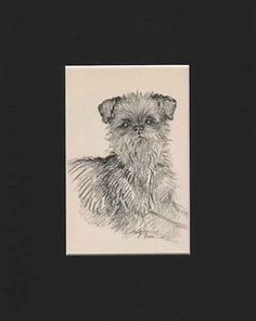 Vintage-Brussels-Griffon-Dog-Print-1938-by-K-F-Barker-8X10-Mat