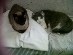 Figaro & Kevin