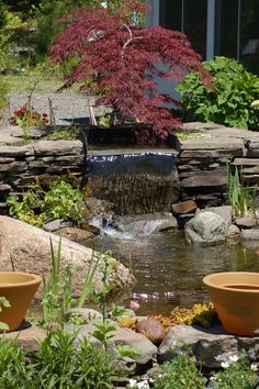 A Japanese maple hovers over the waterfall of this medium-sized water feature. I took this photo near Ellsworth, Maine (USA). Read all about Crimson Queen Japanese maple at http://landscaping.about.com/od/fallfoliagetrees/p/Crimson-Queen-Japanese-Maple.htm