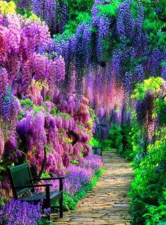 parco solo di piante colorate... Questo si che è un un parco!
