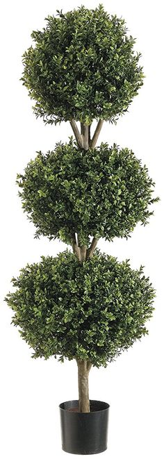 Looking for Silk Decor 1 Ball Boxwood TOP.(P) GRTT Greenery, Two Tone Green ? Check out our picks for the Silk Decor 1 Ball Boxwood TOP.(P) GRTT Greenery, Two Tone Green from the popular stores - all in one. Outdoor Topiary, Topiary Plants, Boxwood Topiary, Topiary Trees, Boxwood Hedge, Topiaries, Garden Planters, Outdoor Pool, Outdoor Spaces