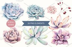 Oh my Succulents watercolor set - Illustrations - 3