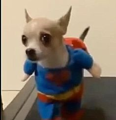 Look!  On The Treadmill!  It's A Bird!  It's A Plane!  It's The Superpup Animal Video Of The Day!!!  ... see more at PetsLady.com ... The FUN site for Animal Lovers