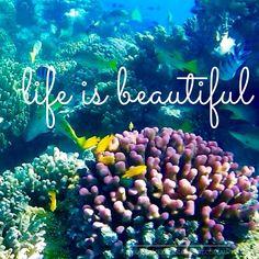 #LifeisBeautiful #daretodream #livingthedream #dreamtimesail #travelbysea #lifeisgood #dreambelieveachieve