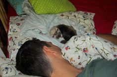 Little Snowy likes to sleep with master in his bed <3