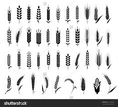 Cereals icon set with rice, wheat, corn, oats, rye, barley. Ears of wheat bread symbols. Organic , agriculture seed, plant and food, natural eat. Vector illustration.