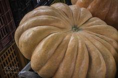 Pumpkin #daleholman #daleholmanmaine