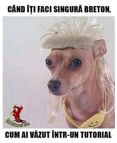 Post with 2708 votes and 119155 views. Tagged with funny, cute, memes, animals, mypenistouchesthetoilet; Shared by Yolandi Visser is aging well. Animal Memes, Funny Animals, Cute Animals, Dog Pictures, Best Funny Pictures, Funny Pics, Yolandi Visser, Ugly Dogs, Die Antwoord