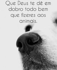 #cachorro  #filhode4patas  #amogato  #gato  #cachorroetudodebom  #amomeucachorro  #pets  #petmeupet  #labrador  #goldenretriever  #pug  #schnauzer  #maltes  #luludapomerania  #viralata  #bulldogfrances