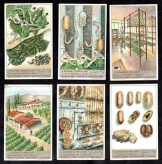 Silk Worms Lifecycle Cards Set Liebig 1938 Insect Moth Silkworms Soie Farming | Collectables, Trade Cards, Liebig Cards | eBay!