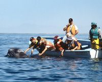 Friendly Whales of Baja | Cabrillo Marine Aquarium Events and News Details