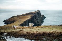 Road trip Ecosse, Neist Point, Ecosse                                                                                                                                                                                 Plus