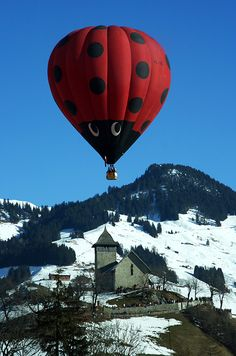 lady bug on fly - Chateau d Oex, Vaud by Cessy Karina