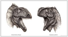 An artist's depiction of two new dinosaur species, Eocarcharia and Kryptops.