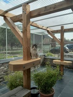 Outdoor cattery i love this having tree branches to scratch and greenery makes it more like proper outdoors love the logs on the ground too – Artofit