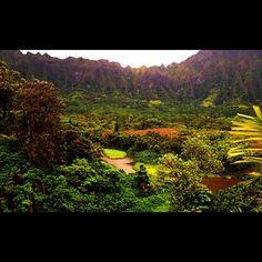Hawaiian Rain Forest Kaneohe, Hawaii -MaileMMM