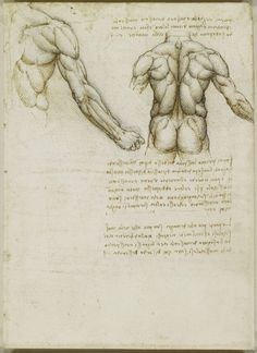 leonardo da vinci two views of a male back . A straight view of the back with no turn can prove problematic for the artist because the major planar breaks in both the rib cage and the pelvis will be absent. When this is the case, movement can be created by adding tone to the major muscle and bone masses in the back - the spinal erectors, lattisimus dorsi, scapula and trapezius, among them.