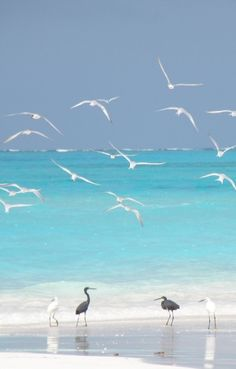beach and birds